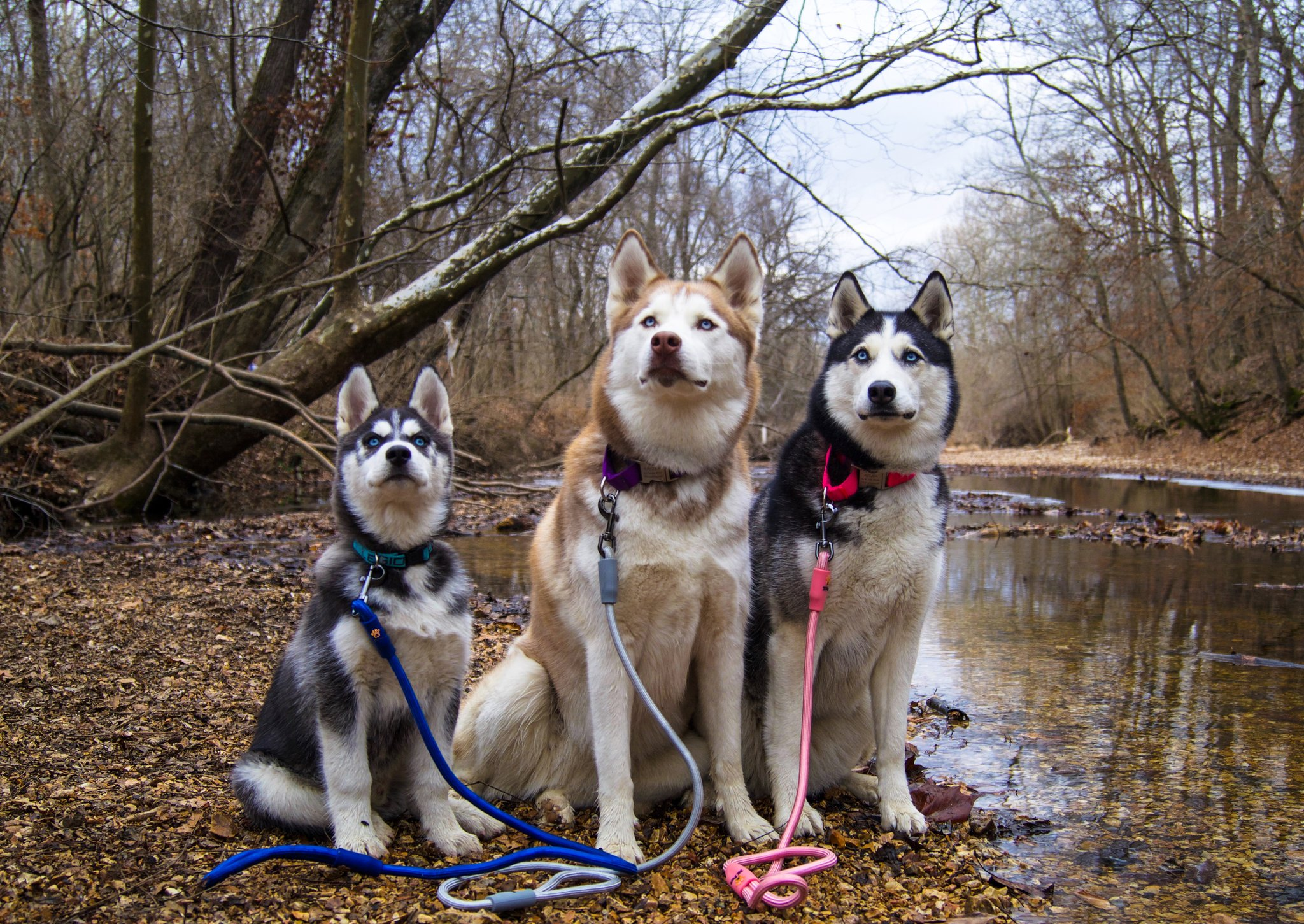 Dogs Modeling Leash
